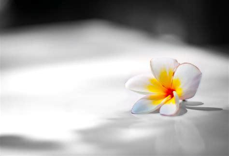 shop white flower  bw background wallpaper  black white theme