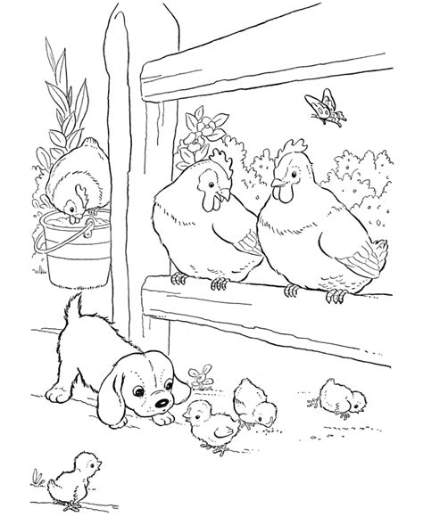 free coloring pages of animals and their babies farm animal chicken coloring page baby chicks and a