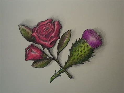 rose and thistle tattoo and scottish thistle entwined tattoos