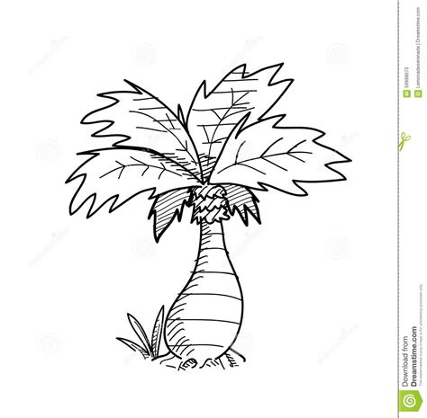 doodle draw tree palm tree doodle stock vector illustration of