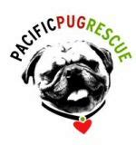 pug rescue portland oregon 47 best pug and rescue images on pug dogs pugs and animal rescue