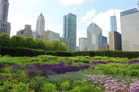 flowers in the garden picture of lurie garden chicago tripadvisor