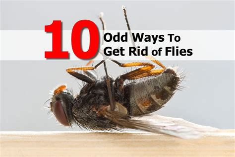 Get Rid Of Flies On Patio by 10 Ways To Get Rid Of Flies