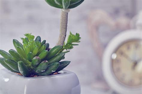 artificial cactus flowers plants in pot home decor garden