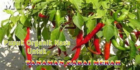 Poc Nasa 3liter Pupuk Organik Nasa 3liter aplikasi produk pupuk organik nasa untuk tanaman cabai merah