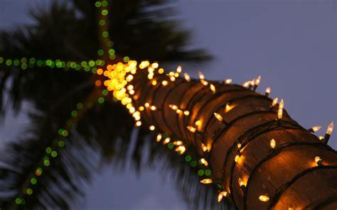 lights on palm tree palm tree lights wallpaper 1920x1200 31254