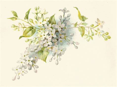 free floral images antique images free flower graphic vintage illustration