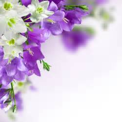 purple flower backgrounds wallpaper cave