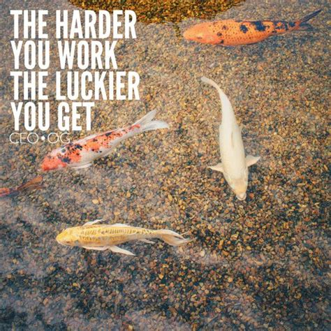 Koi Fish Quote the harder you work the luckier you get koi fish pond