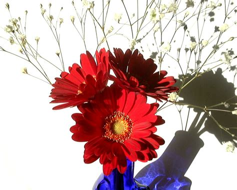 autumn flowers to decorate your desk flower pressflower