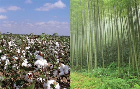 bamboo vs cotton cotton vs bamboo viscose