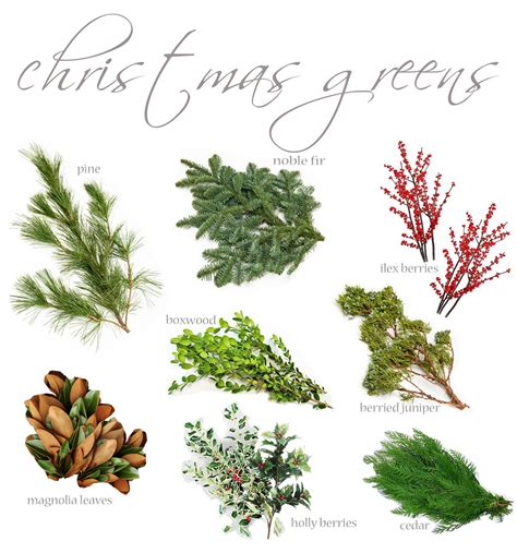 flores del sol know your christmas greens