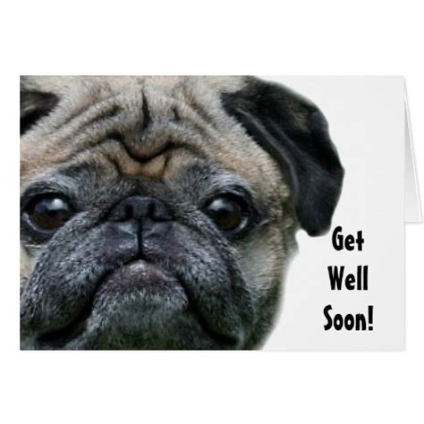 get well pug get well soon pug greeting card zazzle