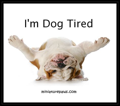 dog meme dog tired bull dogs pinterest