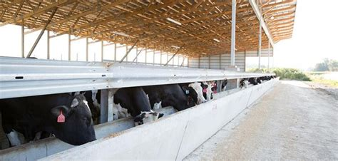 Inside Garage Designs use indoor feedlot facility for cattle confinement size