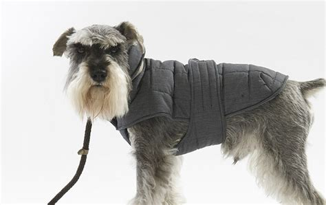 coats for dogs the top 6 best winter coats pretty fluffy pretty fluffy