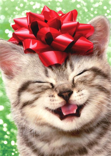 happy kitten  red bow cat christmas card  avanti press