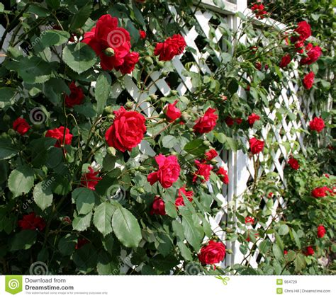 Rose Trellis Plans red rose trellis stock image image of fence colorful