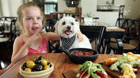 dogs menu now it s bone appetit as dogs and owners enjoy meals together at the bunch restaurant