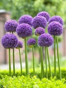 25 best ideas about tall flowers on pinterest pink perrenials flowers garden and purple