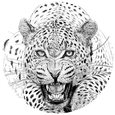 cool grey ink realistic roaring jaguar tattoo design by