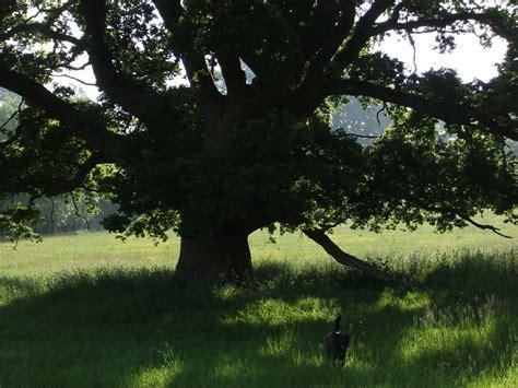 tanger deer park tree lighting sketch blog annie wood art