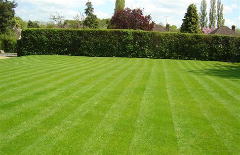 lawn care vertopia gardens