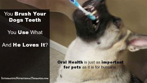 yorkie teeth cleaning cost as 25 melhores ideias de teeth no sa 250 de dos animais de estima 231 227 o