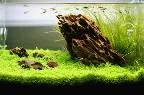 dragon stone aquascape dragon stone nano tank inspiration pinterest dragons