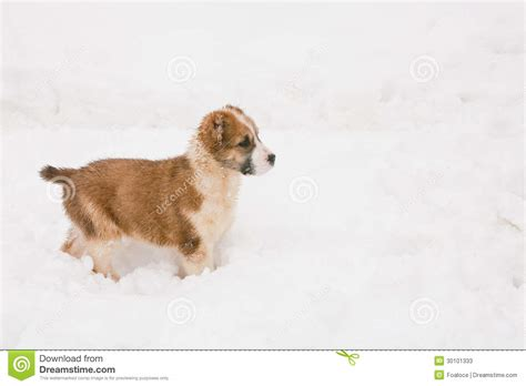 walking puppy walking puppy stock photos image 30101333
