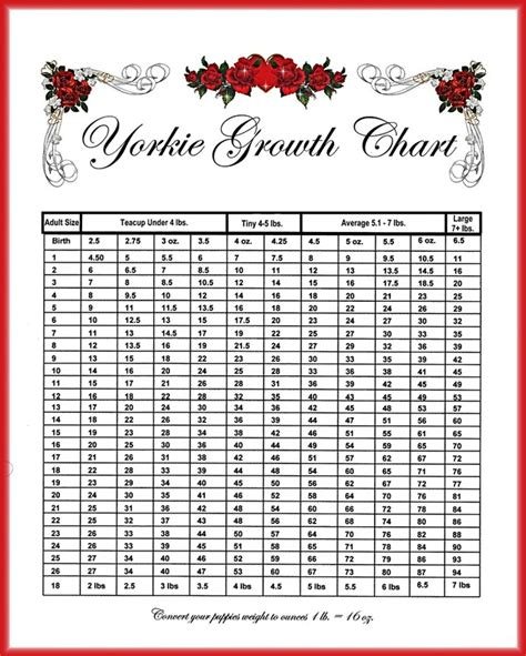 yorkie puppy weight calculator weight chart margaree yorkies maltese morkies
