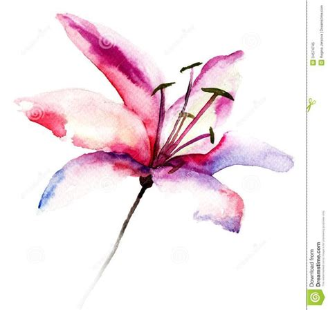 abstract watercolour lily google search watercolour