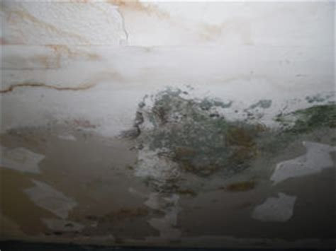 what does house insurance cover does homeowners insurance cover mold or black mold all claims usa