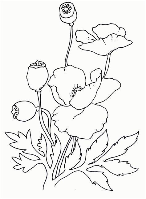 poppy wreath coloring page coloring pages poppy flower az coloring pages