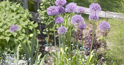 weed killer for flower beds recommended pre emergent weed herbicides for flower beds ehow uk