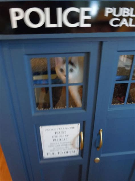 tardis dog house tardis cat house i wanna play in that geekologie