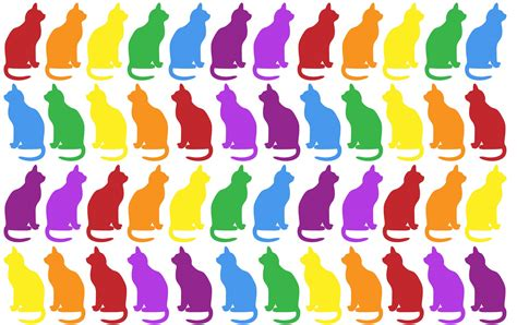 colorful cat wallpaper colorful cats wallpaper background free stock photo
