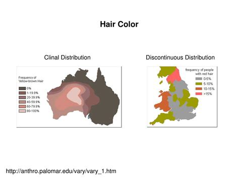 Coloring Hair Power Point | ppt nature genetics supplement november 2004
