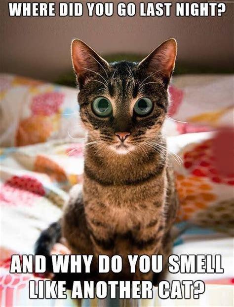 Cutest Cats Pet Pet Pet Product 7 by 391 Best Images On Ha Ha Stuff