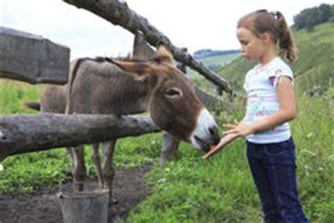 alimentazione asino asino e carota illustrazione vettoriale illustrazione di
