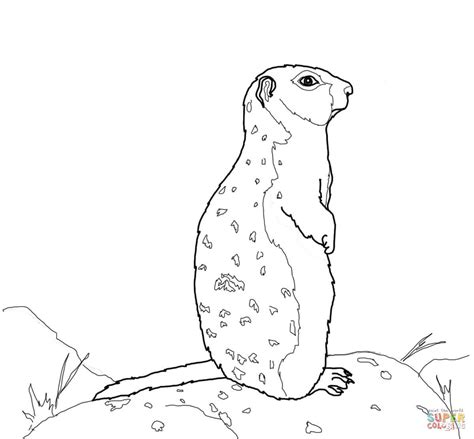 ground squirrel coloring page 301 moved permanently