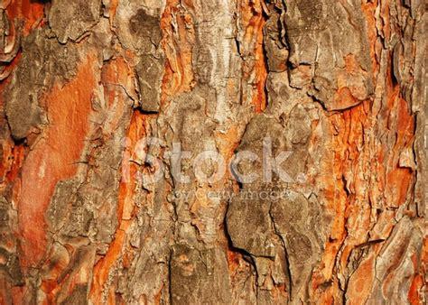 pine tree bark texture stock photos freeimages com