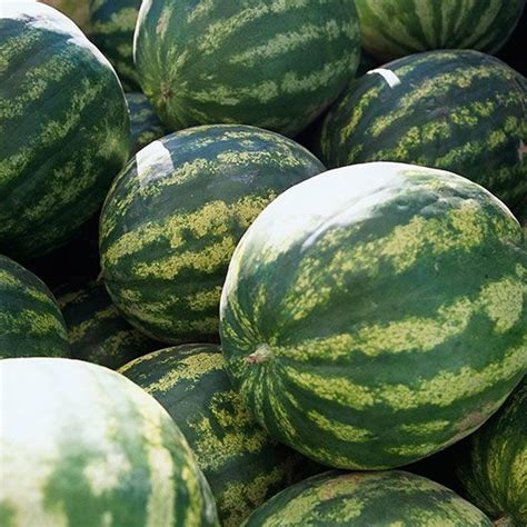 Watermelon Planter by 625 Best Grow Your Own Produce Images On Gardening Vegetables Gardening Tips And