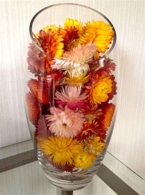 elicriso coltivazione in vaso coltivare l elicriso aromatiche consigli per la