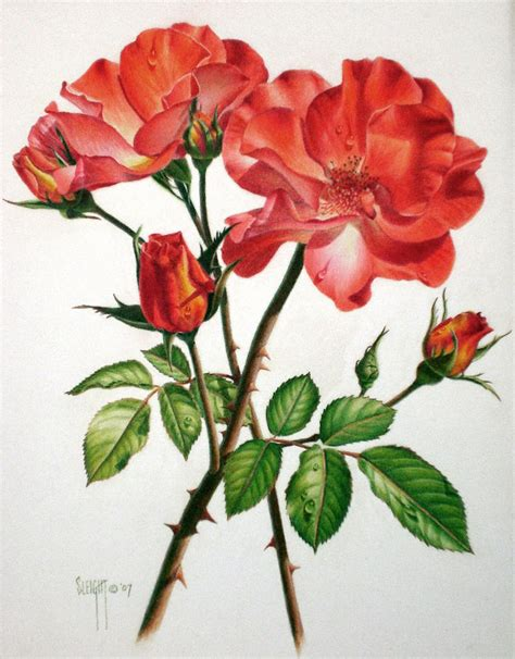 Drawing Of Flowers by 35 Beautiful Flower Drawings And Realistic Color Pencil