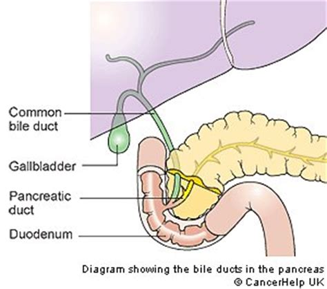 diagram of bile duct system the pancreatic and biliary stent