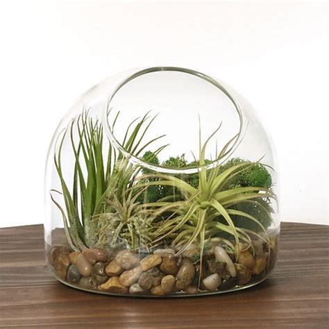 desk air plant terrarium kit