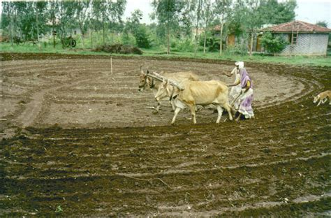 Image Gallery Soil Preparation