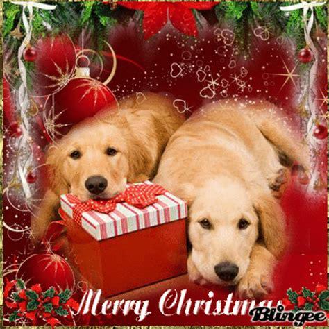 imagenes animales navidad yuma y bobo os desean feliz navidad picture 103982314