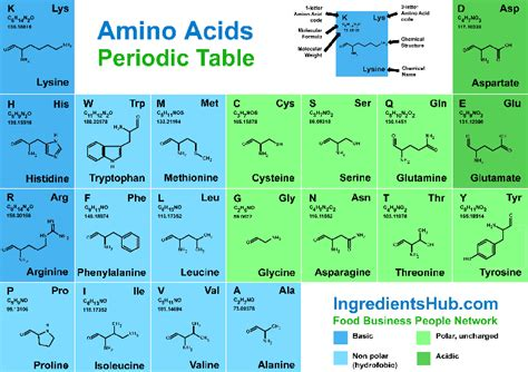 amino acids table amino acids table www pixshark images galleries with a bite